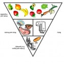 Is the food pyramid upside down?